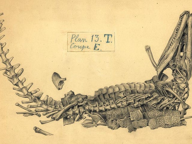 The 19th-Century Artist Who Sketched Fossils In Their Death Poses