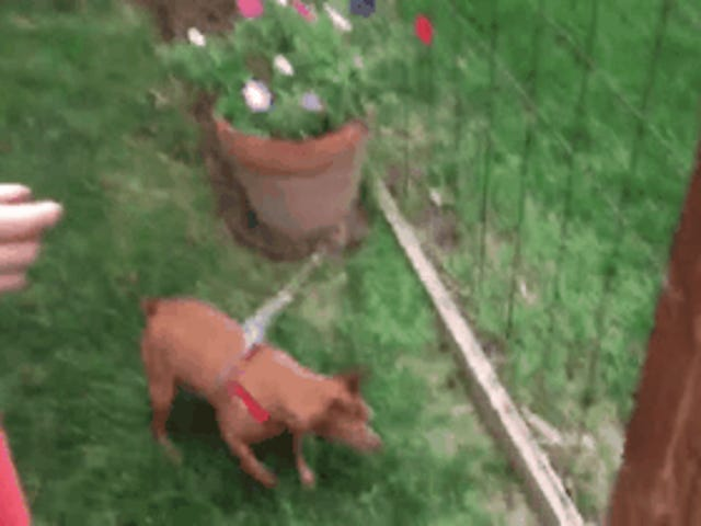 Little dog problems