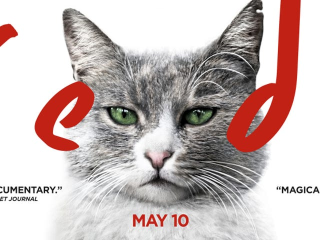 Midnight Movie: Kedi