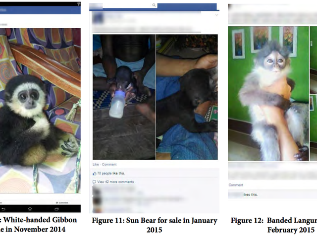 Jerks Are selling Species Endangered on Facebook