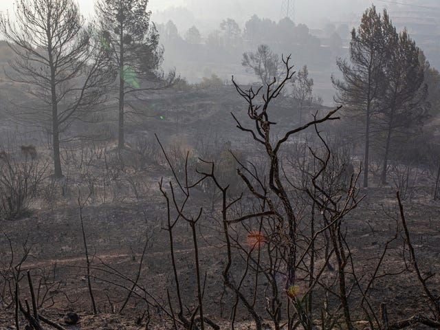 Wildfire Explodes in Spain as Europe Reels From Record Heat