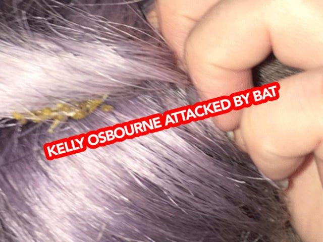 En Bat Shit på Kelly Osbourne's Head, som er en ny
