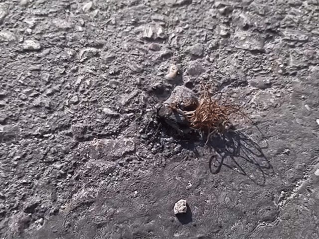 Revolting Parasites Emerge From Dead Cricket and Try to Mate in a Ball of Evil