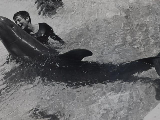 L'insólita historia de Peter, el delfín que se enamoró de su profesora de inglés