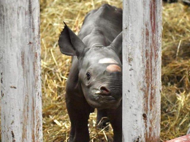 Magische baby geboren onder dieren op kerstavond, veel bezoekers verwacht