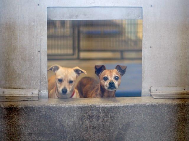 Moby i Lisa Bloom są częścią ruchu, który sprawi, że schroniska dla psów w Los Angeles będą wegańskie