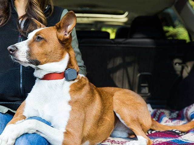 Never Worry About Lost Fur Babies with This $60 GPS Pet Tracker