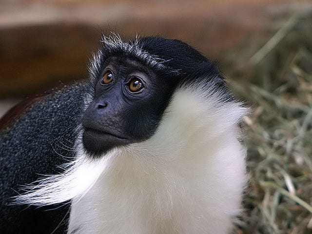 Krisis Kemusnahan Mendapatkan Lebih Dire, Dengan 28,000 Spesies Berisiko