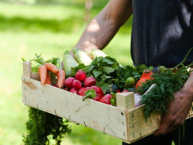 Onko vegaani ruokavalio paras urheilijoille?