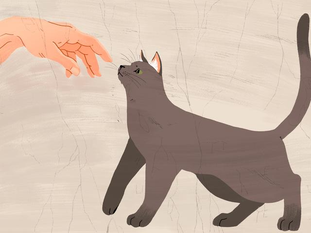 Wie man eine Katze dazu bringt, Sie zu mögen