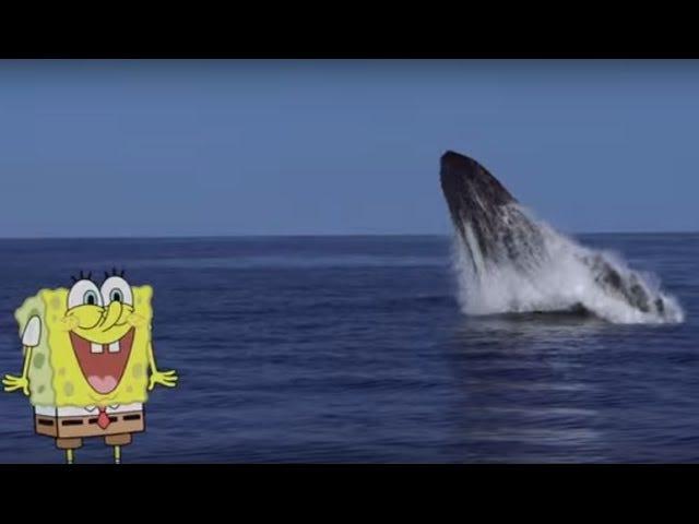 Губка Боб Квадратные Штаны хочет, чтобы вы, пожалуйста, отдать планктону должное