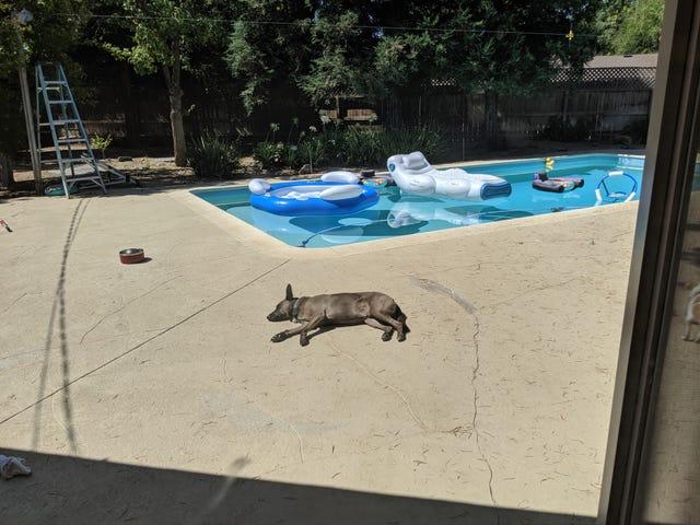 Fresno Doggo