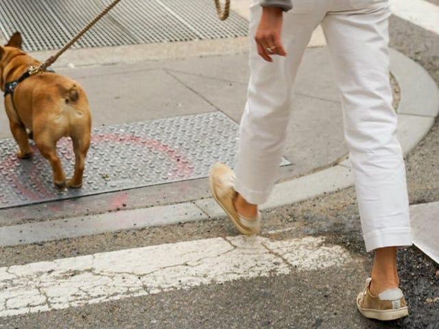 Hvordan man ved, om det er for varmt at tage din hund en tur