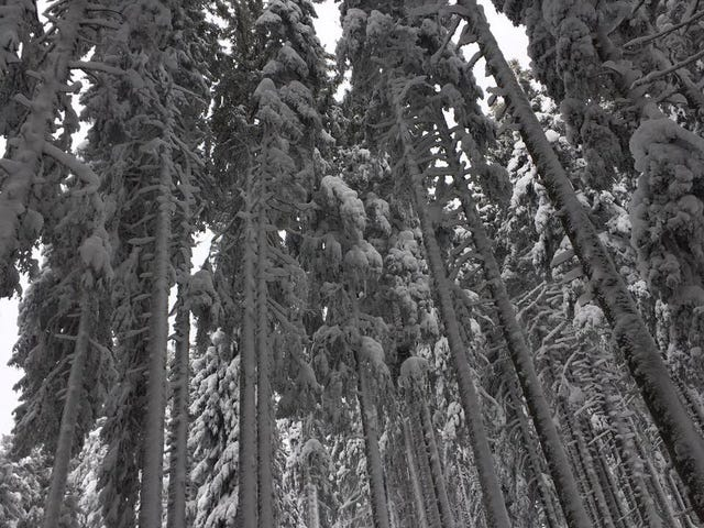 Erdődesszert