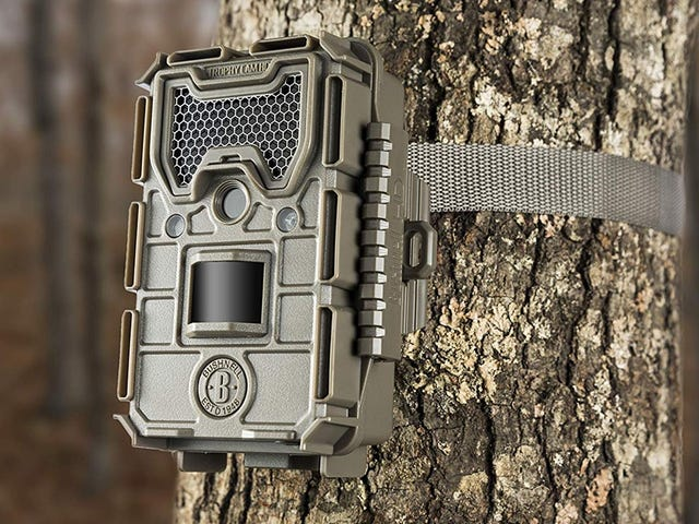 Film Birds, Deer, and El Chupacabra In Your Backyard With This $73 Trail Cam