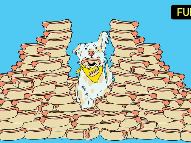 ¿Podría un perro ganar el concurso de comer perros calientes?