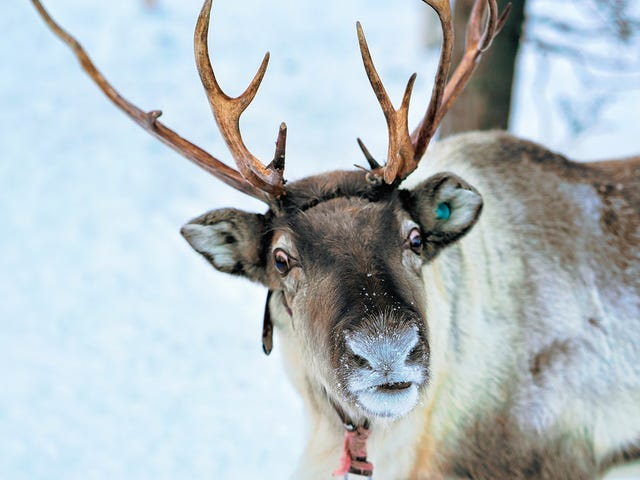 Brewery asked to remove cans displaying NSFW reindeer games