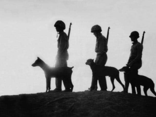 Your 2017 Veterans Day Open Thread of Joy