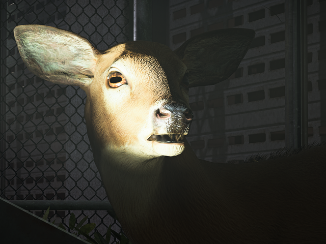 Meine Reise, zum aller wild lebenden Tiere in <i>The Division 2</i> zu fotografieren