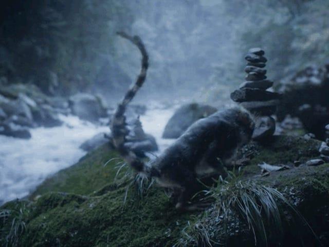 Μία ταινία μικρού μήκους σε ένα κόσμο όπου η εξέλιξη συμβαίνει γρήγορα - και είναι συχνά θανατηφόρα