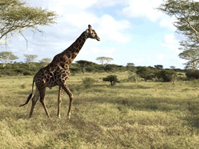 Saluti dal Sudafrica - Primi safari