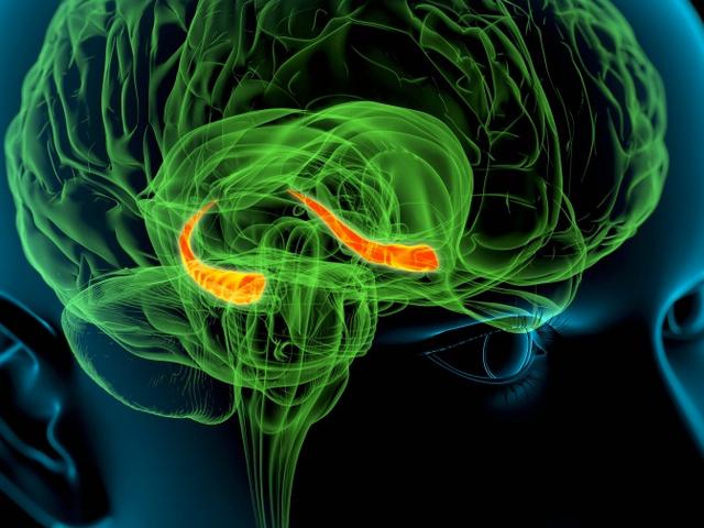 Ένα cronómetro en el cerebro: nuevas pistas sobre cómo medimos el tiempo