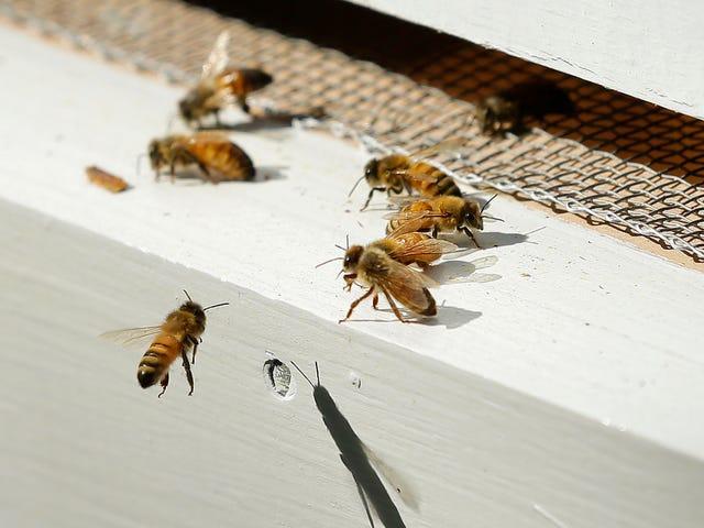 蜂はめちゃくちゃですか?