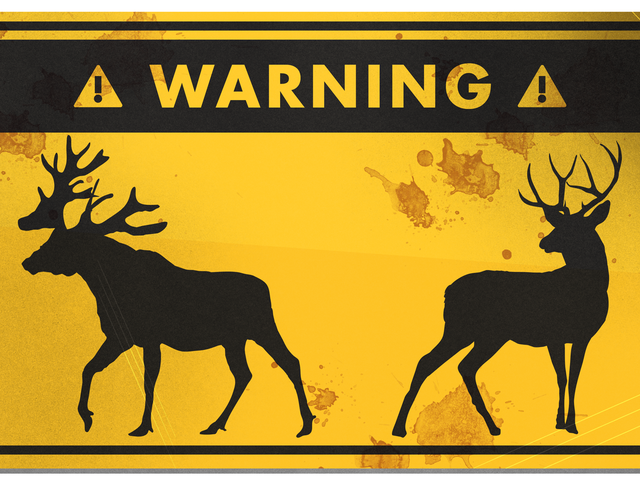 How to Survive a Deer or Moose Attack