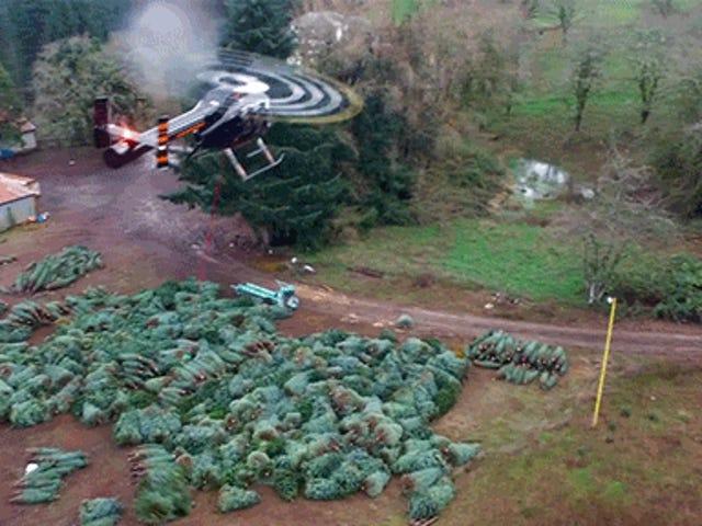Regarder un fouet d'hélicoptère porter des arbres de Noël me procure l'esprit des vacances