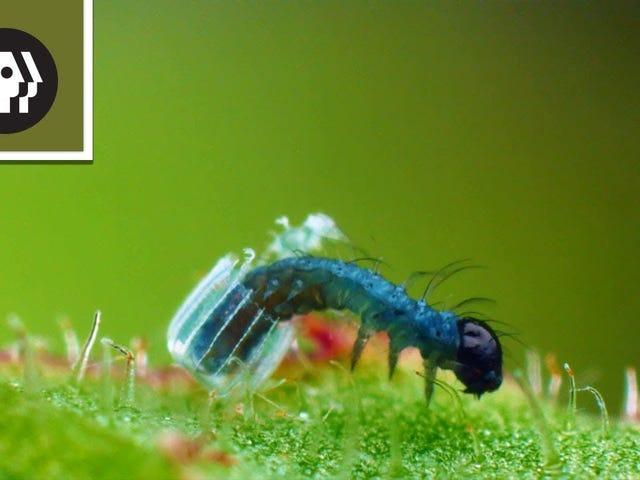 Ini Fakta Baru yang Luar Biasa dari Telur Laying Butterfly Akan Membuat Anda Cinta Bugs