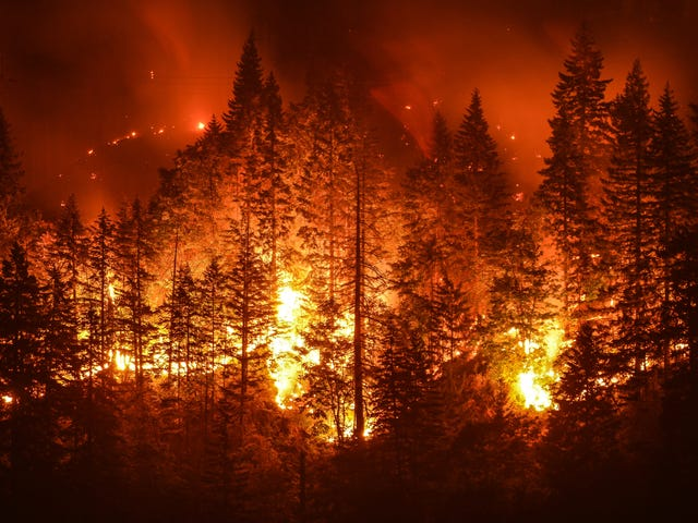 How to Help Those Impacted by the Wildfires on the West Coast
