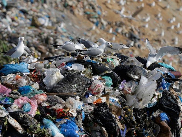 Ik kan niet stoppen met denken over de dode walvis die 17 pond plastic afval at