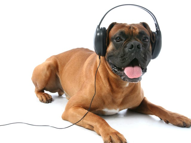 Let's give Spotify's Pet Playlists a shot