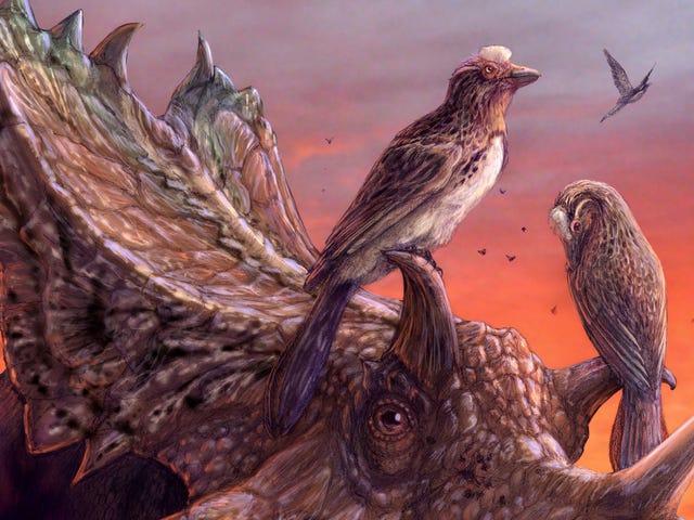 अविश्वसनीय बर्ड-डायनासोर नमूना संग्रहालय भंडारण में 25 वर्षों के बाद वैज्ञानिकों को रोमांचित करता है