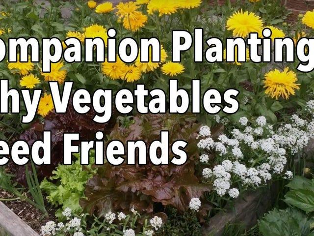 ทำไมคุณควรปลูกดอกไม้ด้วยผักของคุณ
