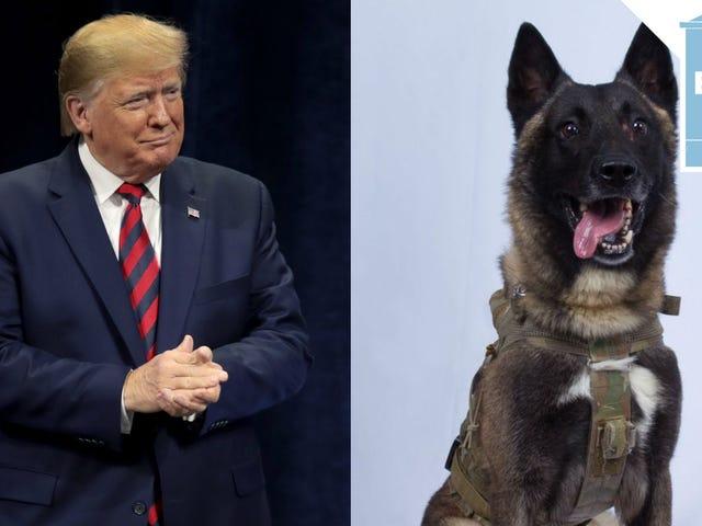Le président n'a jamais rencontré de chien