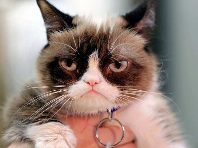 Everyone Involved in This $1.8 Million Grumpy Cat Lawsuit Sucks Except for the Cat