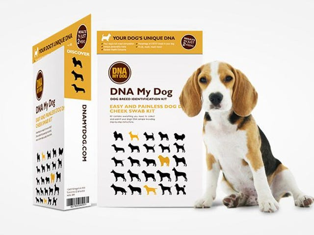 The DNA My Dog Breed Identification Test Is Now Just $50 (35% Off)