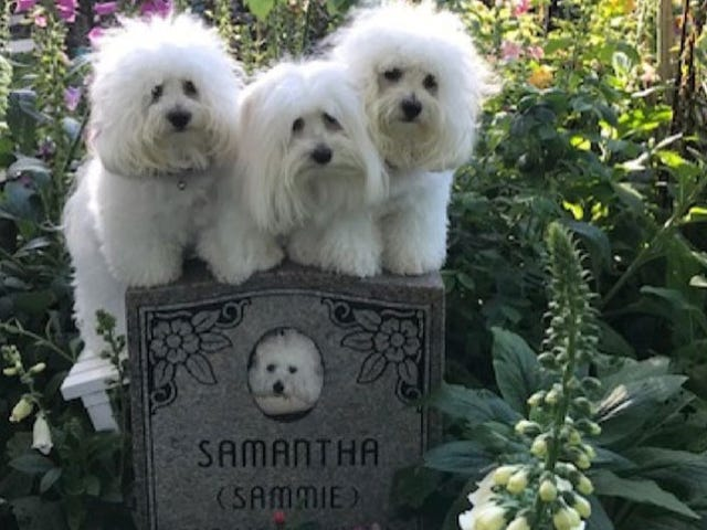 バーブラストライサンドの犬たち:僕たちは死んだクローンママが恋しい