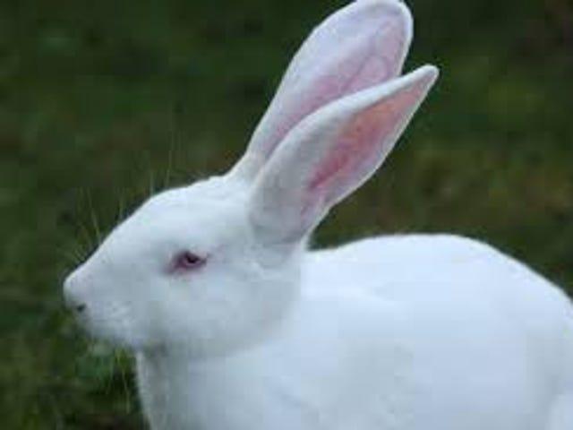 White Rabbits! It's September