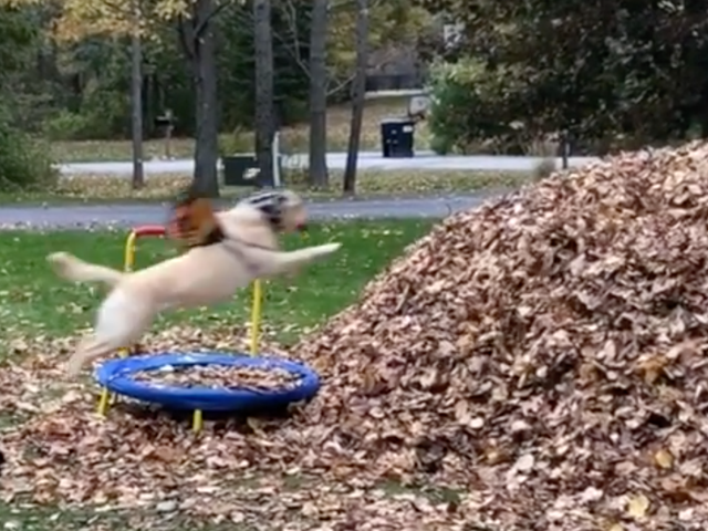 サタデーナイトソーシャル:ベリーグッドガールが葉の山を取得
