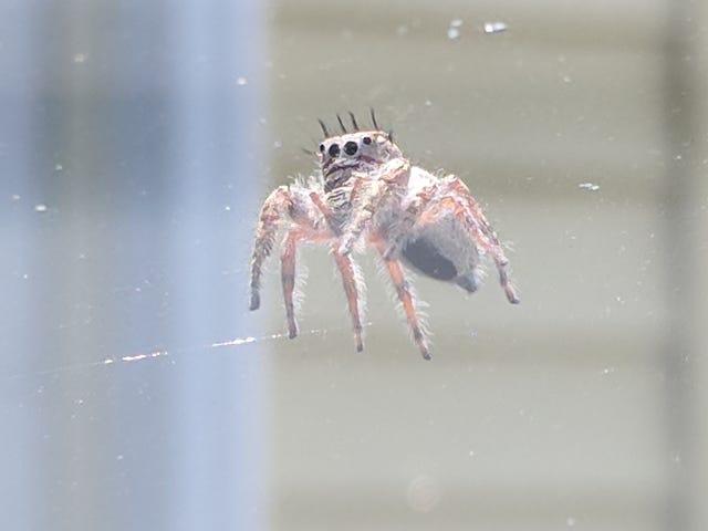 All Hail Spiderbro