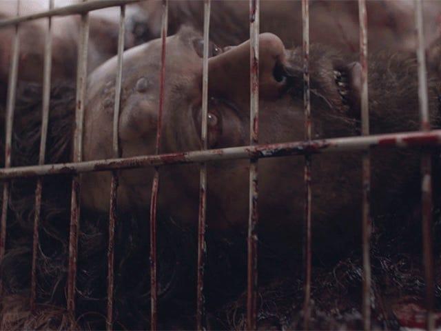 Fear the Walking Dead's Incredibly Gory VFX Video не для тех, у кого слабые желудки