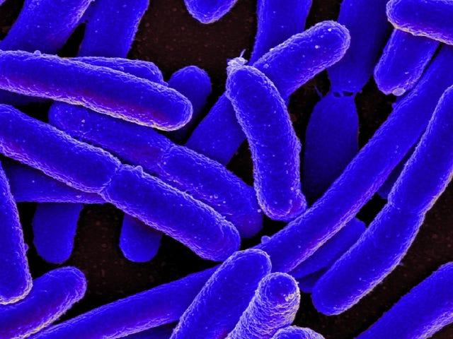 Les superbugs qui causent les infections urinaires se propagent en dehors des hôpitaux