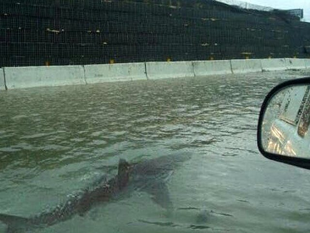 Este tiburón lleva apareciendo en huracanes, tifones y tormentas tropicales desde hace seis años