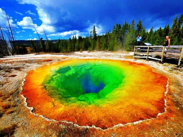 El pensamiento grupal es como el parque de Yellowstone