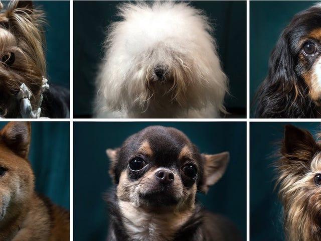 El estudio genealógico del perro más completo hasta la fecha revela parte de su historia perdida