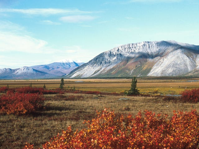 Interior Department Accused of Hiding Key Info on Impacts of Drilling in Arctic National Wildlife Refuge