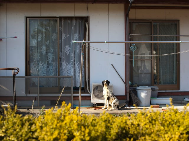Japanese Government Wants Evacuees To Return To Fukushima In Time To Make Olympics Look Good