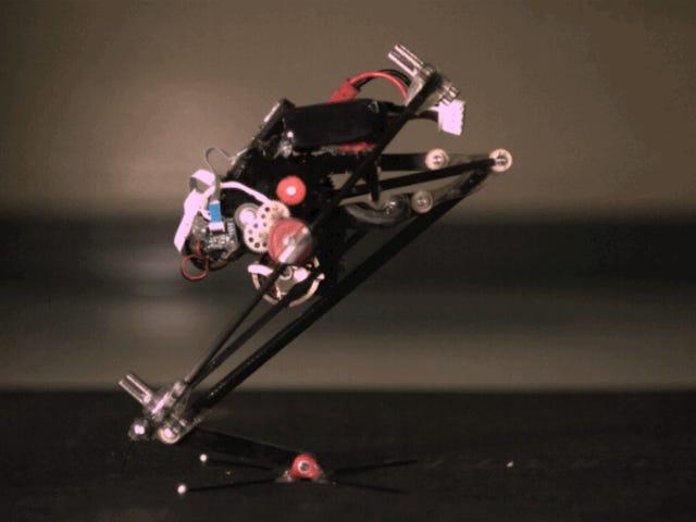 Dieser entzückende Roboter kann Parkour viel besser machen als Sie